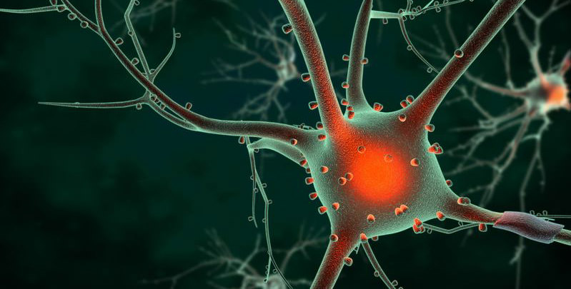 how-extra-virgin-olive-oil-can-protect-from-alzheimers-disease